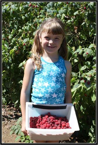 Haugen's You Pick or We Pick Raspberries and Blueberries. Pick Fresh Fruit in Whatcom County!